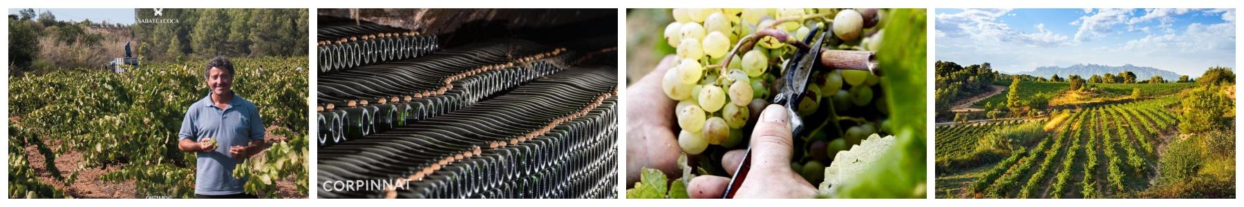 Castellroig - Finca Sabaté i Coca - Vins del Terrer - D.O. Penedès - Corpinnat